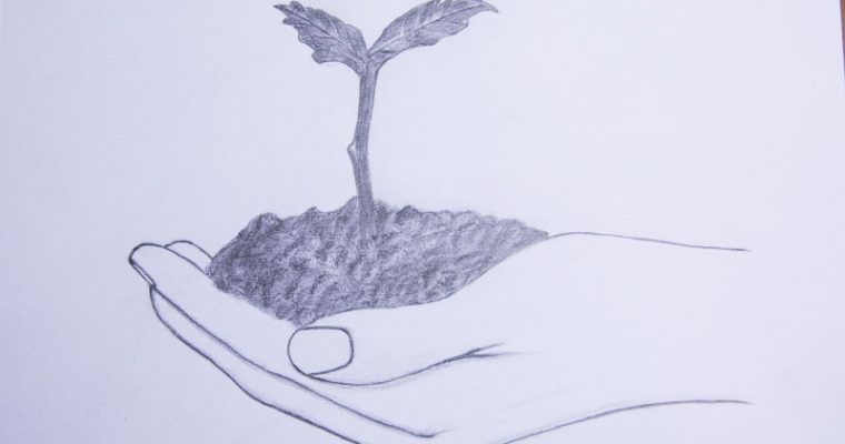 how to draw a hand holding a plant Step by step