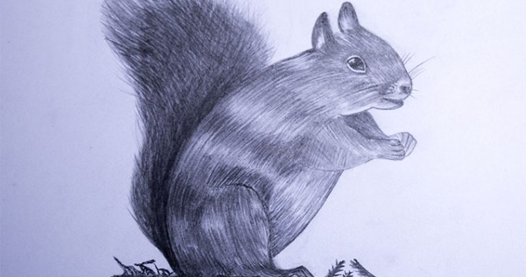 how to draw a squirrel easy