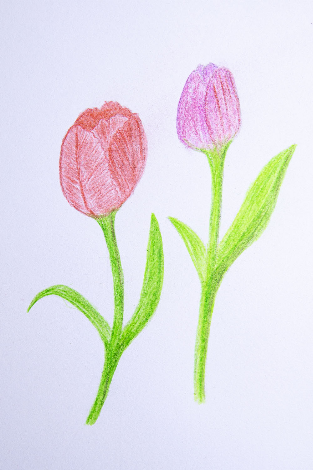 how to draw tulip flower