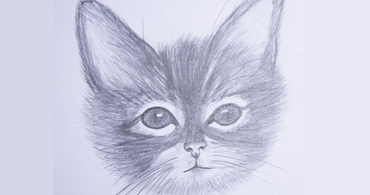 how to draw a cat face for beginners