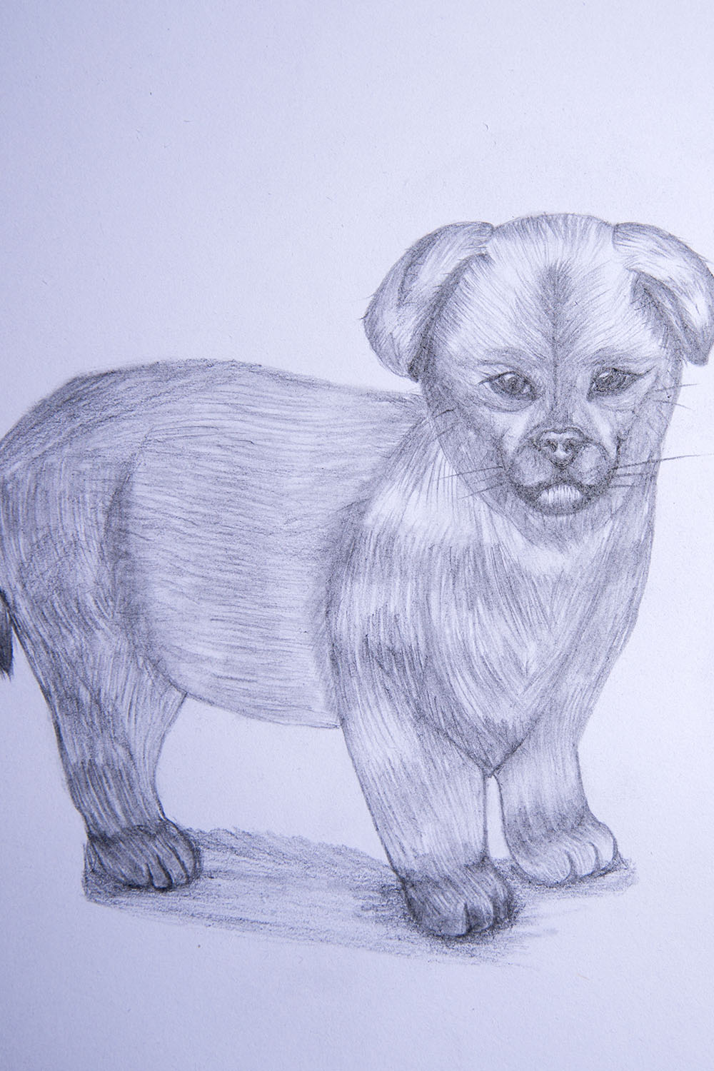 how to draw a puppy step by step   Pencil drawing