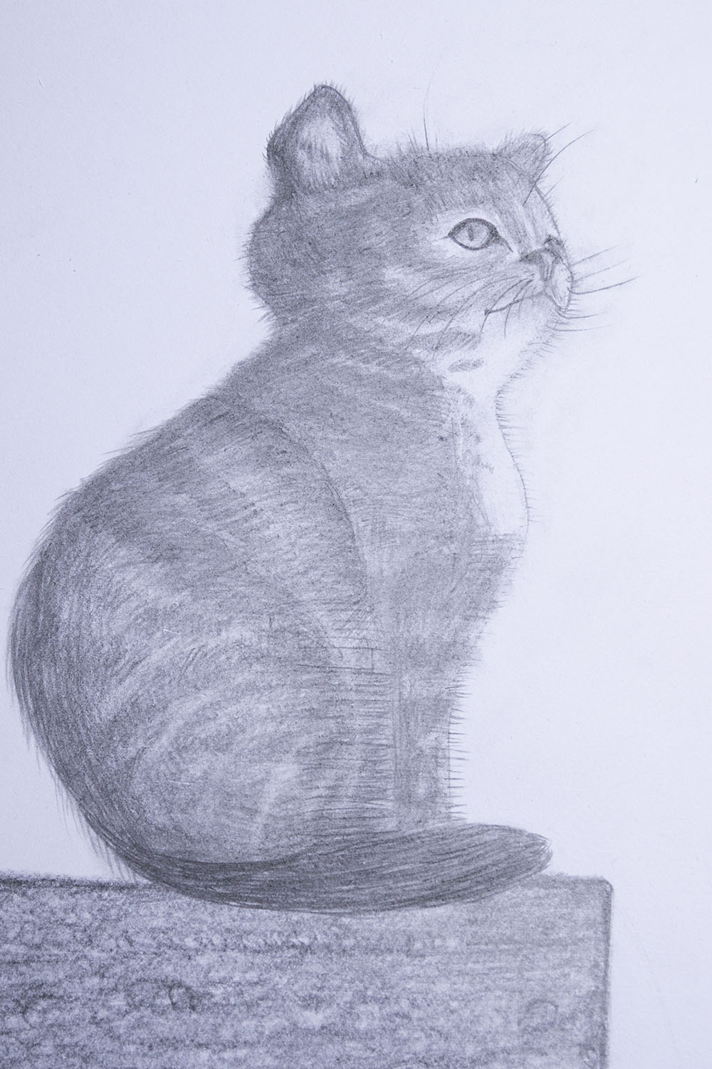 how to draw cat step by step for beginners