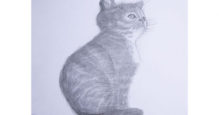 how to draw cat step by step