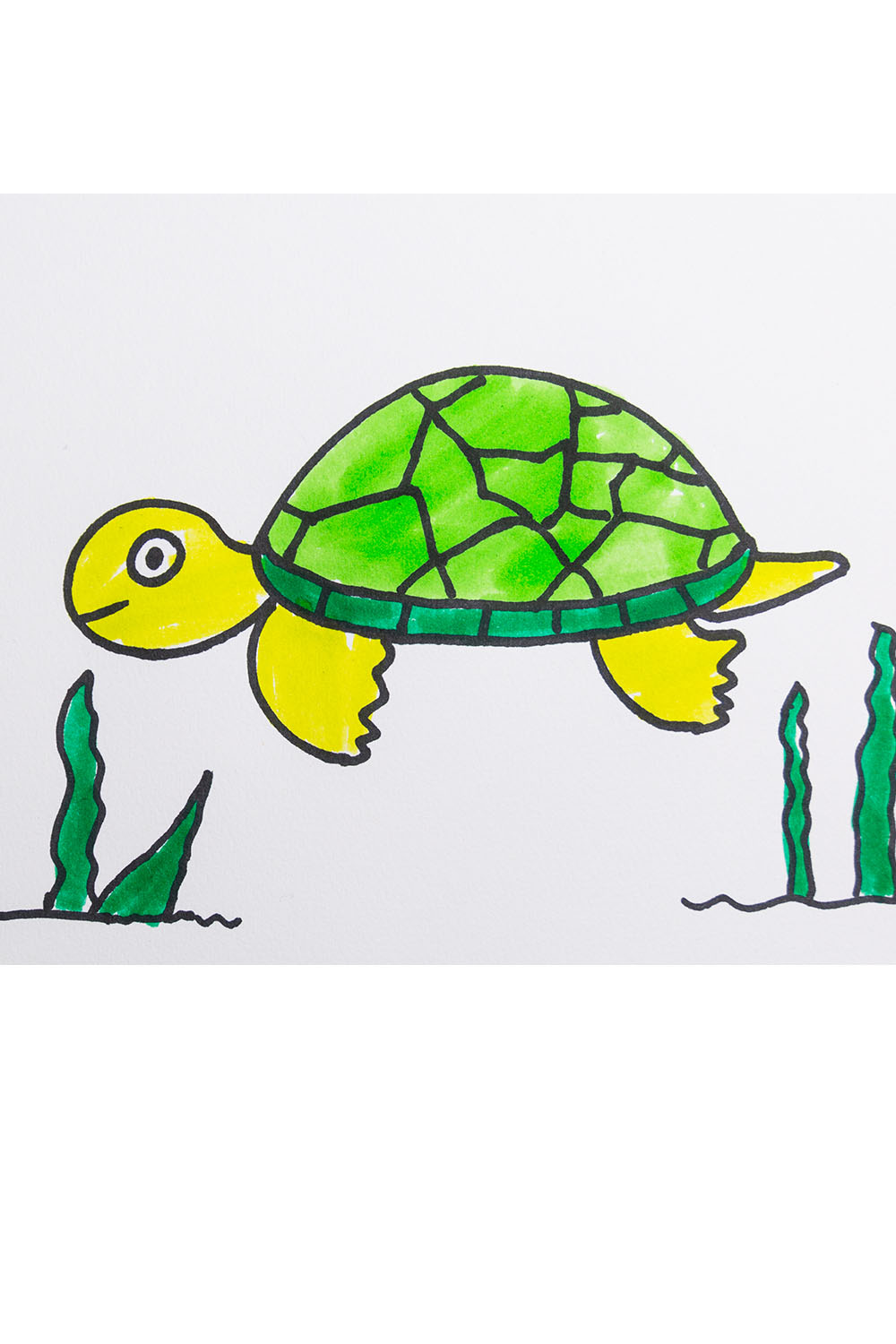 Draw a turtle for kids