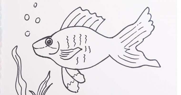 Draw fish for kids
