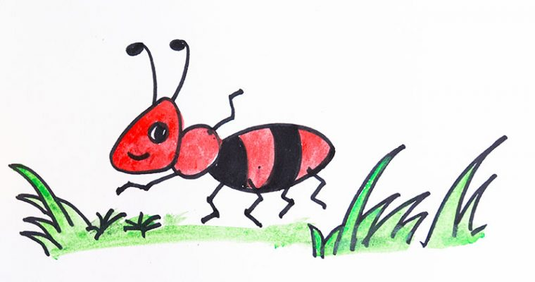 How to draw ants